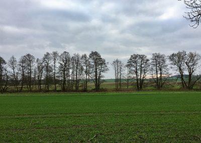 Natur Breitenteicher Mühle 2017